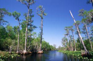Kayak in Okefenokee Swamp Georgia