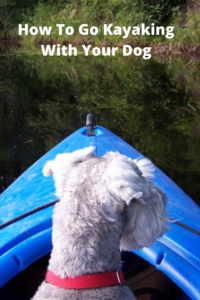 How To Go Kayaking dog