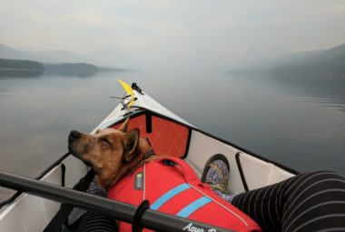 Dog Sleep In Kayak