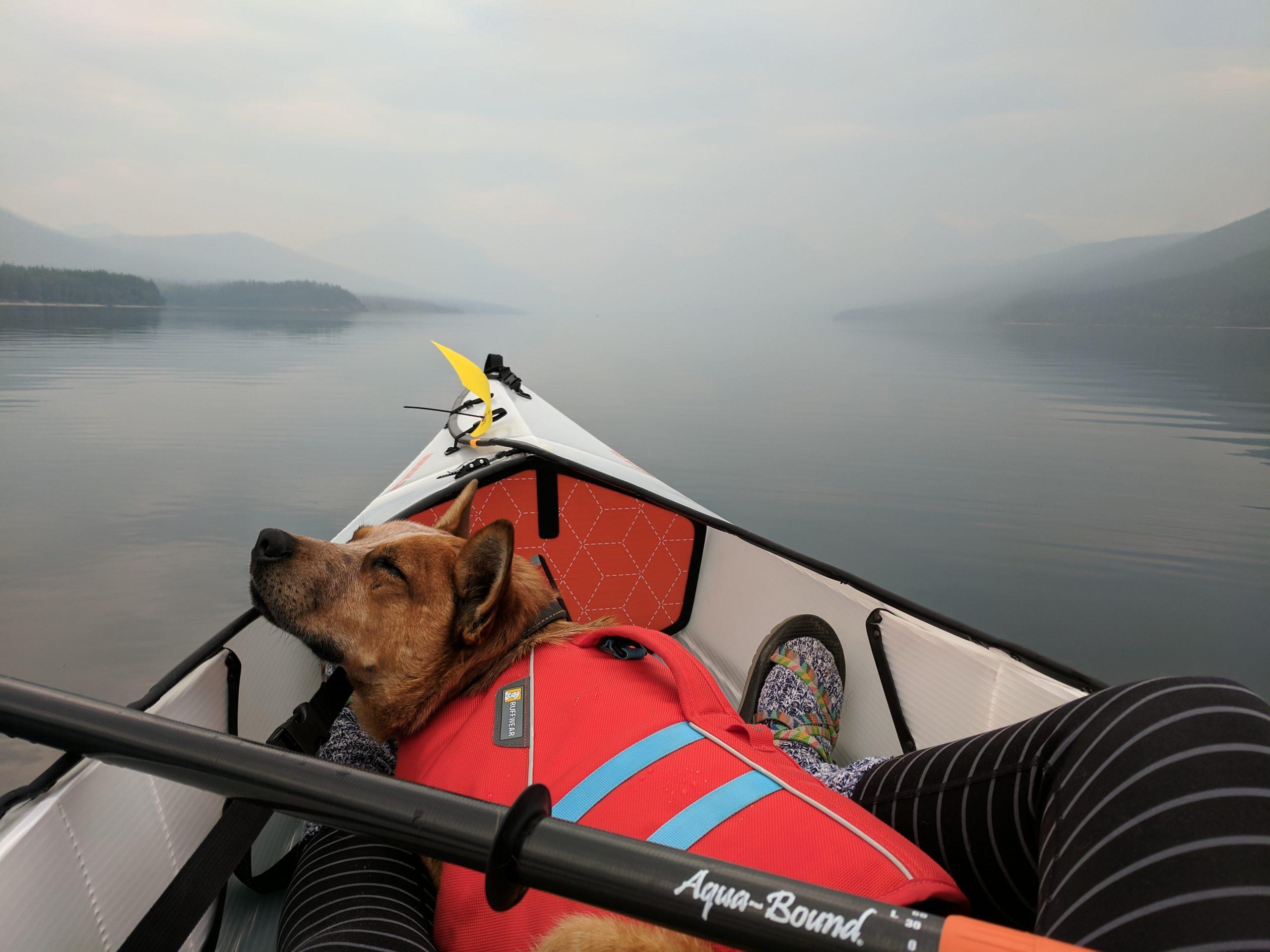 Dog Sleep In Kayak